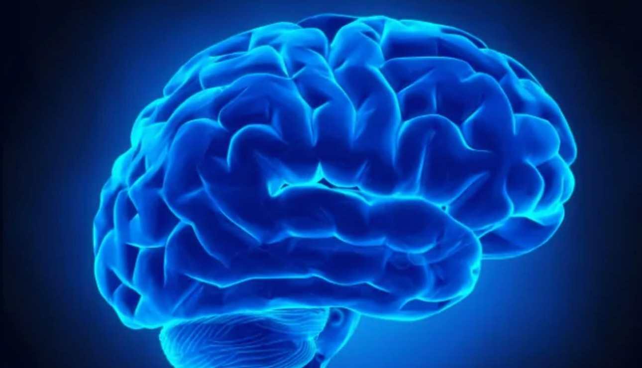 Fungsi Otak Yang Berbeda
