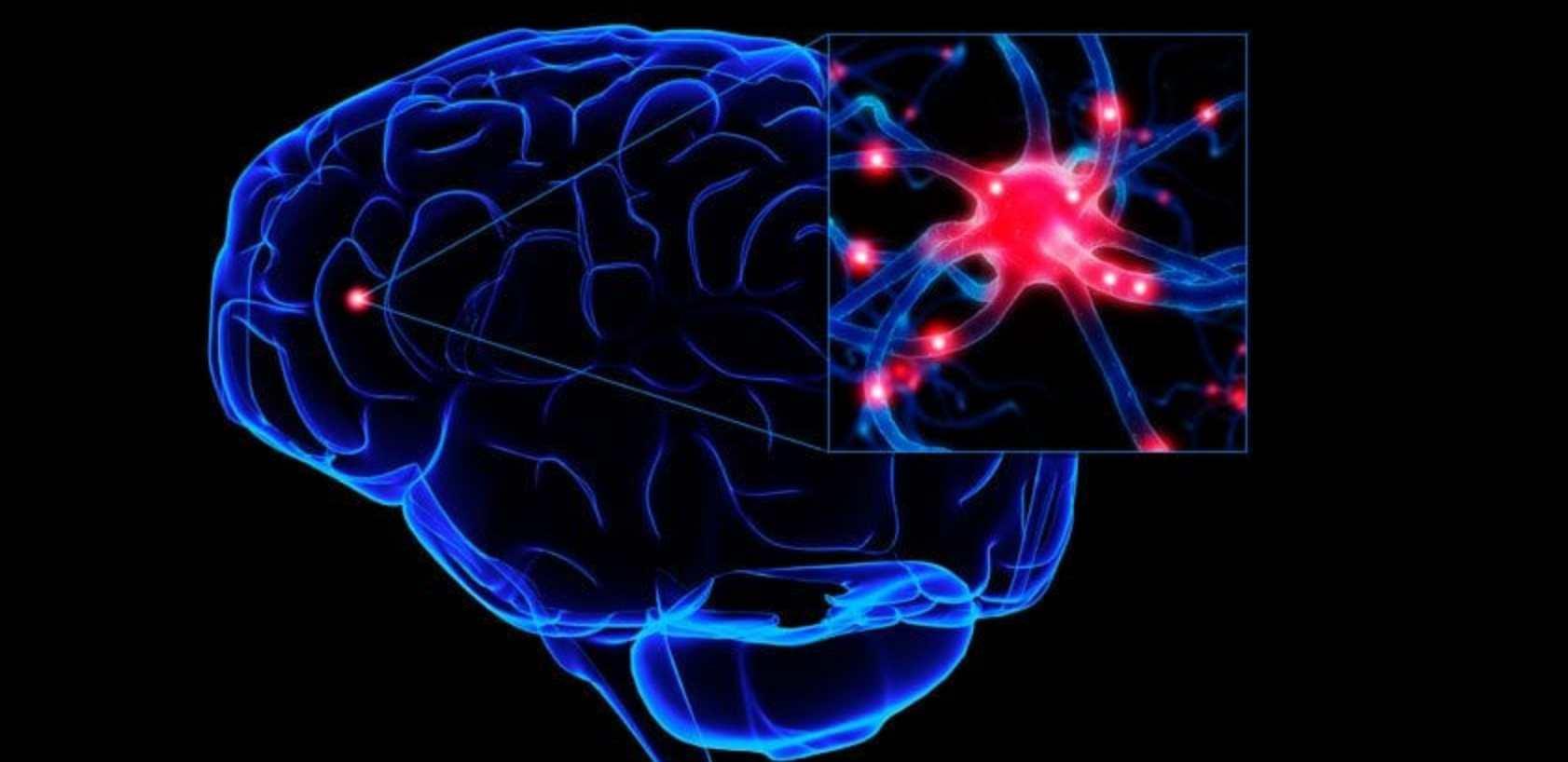 Reaksi Kimia Pada Otak